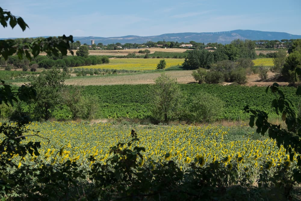Languedoc vineyard view