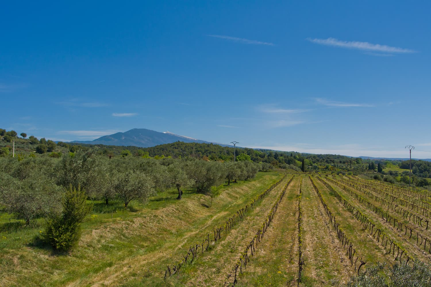 Provence countryside views