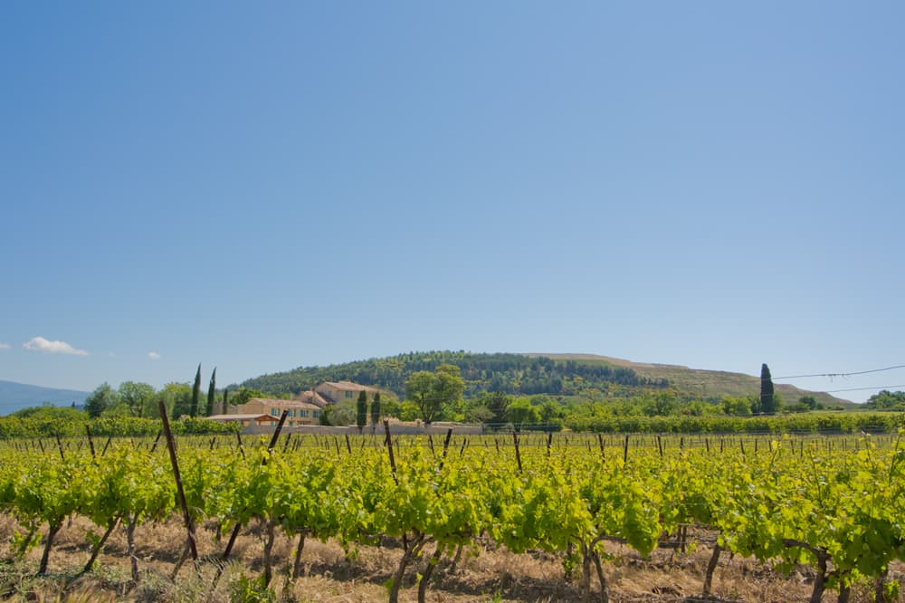 Provence vineyard views